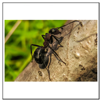 FAQ om Myror och hur du blir av med dem