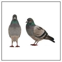 Fågelskrämmor