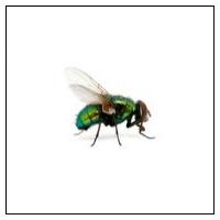 Miljövänlig flugfälla för husflugor