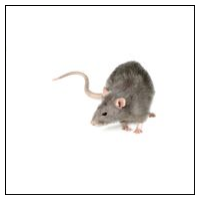 Råttskrämmor