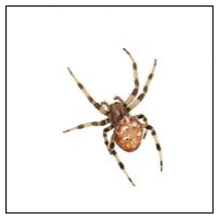 Bekämpa spindlar själv
