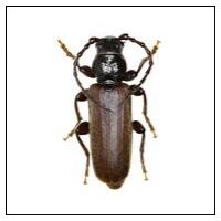 Träförstörande Insekter