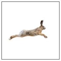 Hare Skrämmor