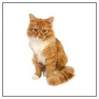 Kattloppor
