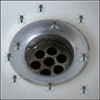 Fjärilsmygg (små flugor)