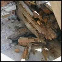 Träförstörande Svampar