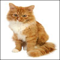Kattskrämmor