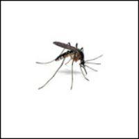 Myggaskrämmor