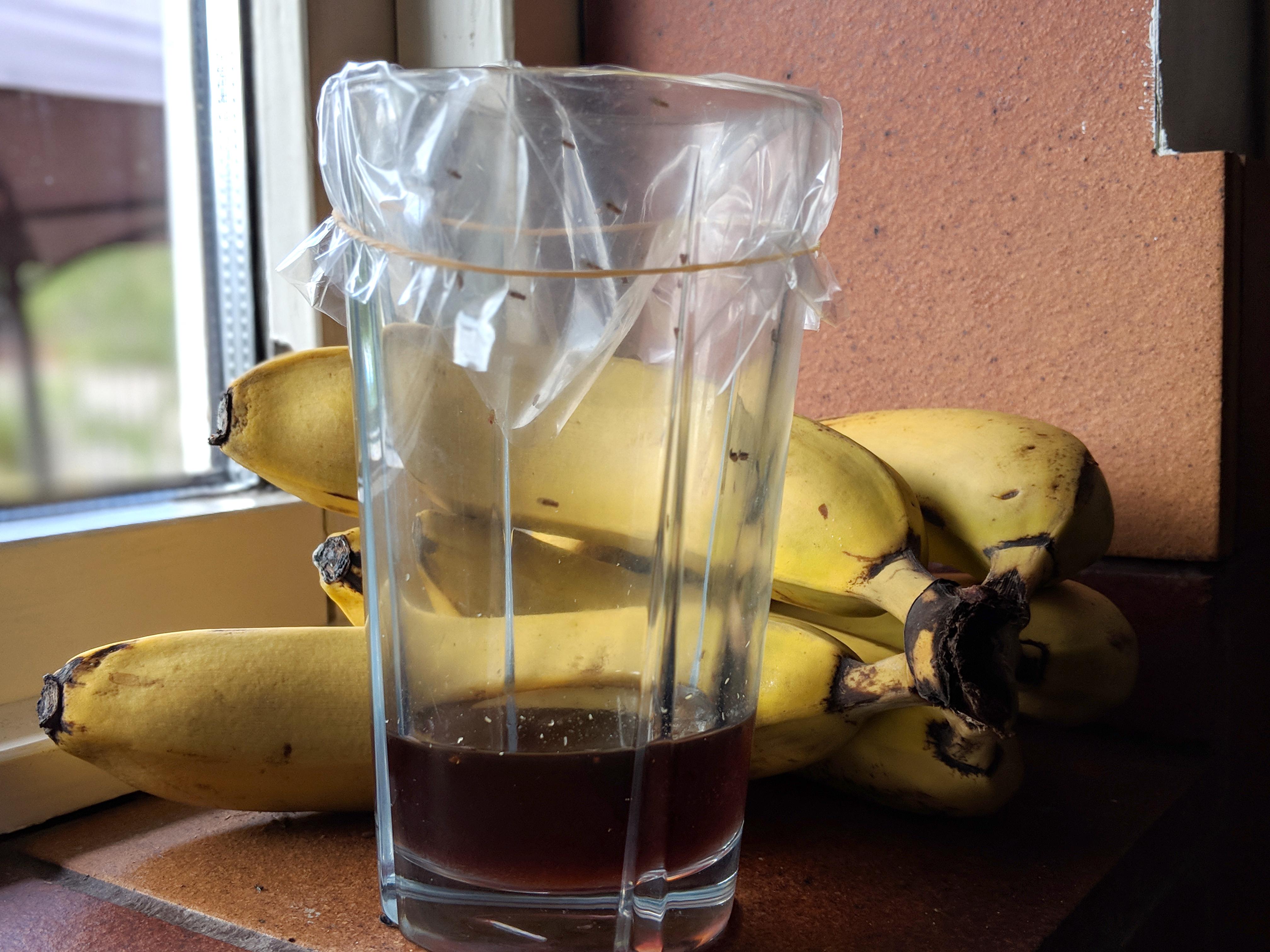bananflugor