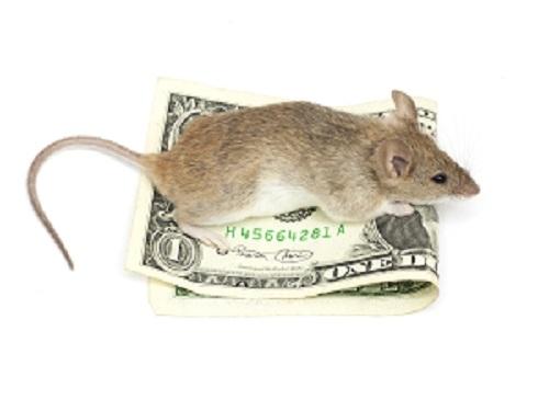 mus som sitter på sedeln