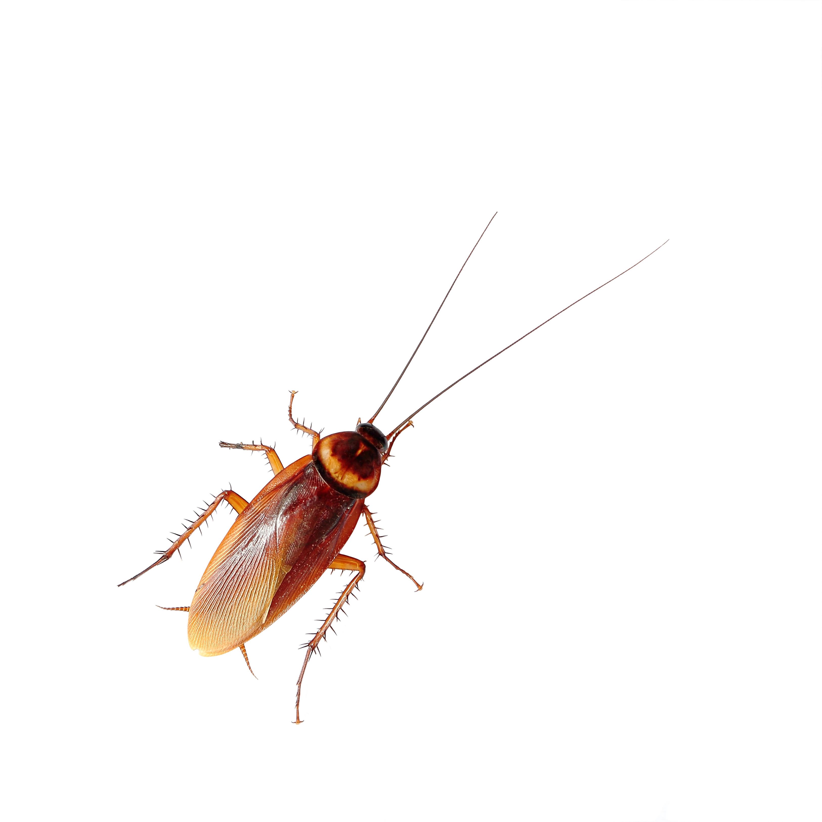 Bild av kackerlacka