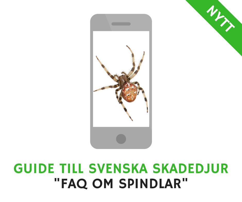 FAQ om spindlar